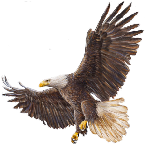 eaglemoto